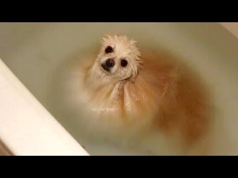 connectYoutube - FUNNY DOGS + WATER = You LAUGH (Funny DOG VIDEOS compilation)