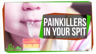 The Super Strong Painkiller Hiding in Your Spit