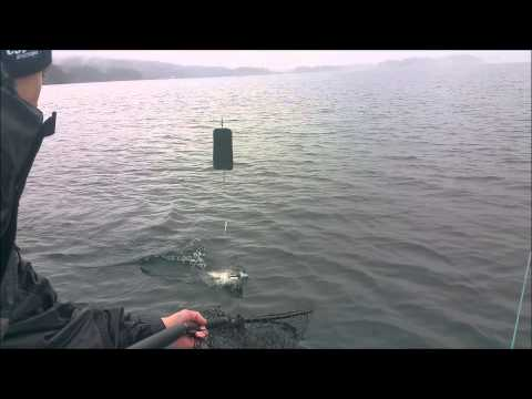 Winter Chinook Fishing off of Vancouver Island