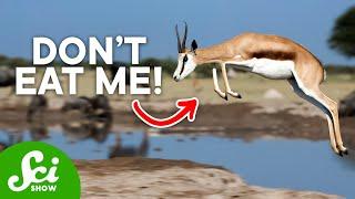 10 Bizarre Ways to Avoid Being Dinner?