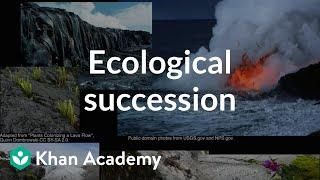 Ecological succession    Ecology   Khan Academy