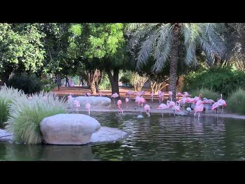Visiting The Al Ain Zoo (in HD)