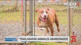 Esperanzados al enviar animales abandonados a EEUU tras terremoto