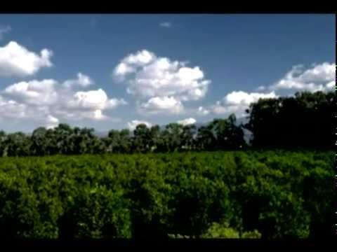 Aerosol Crimes (aka Chemtrails) 2005 documentary movie play to watch stream online