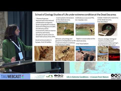 School of Zoology Studies of Life under extreme conditions at the Dead Sea area