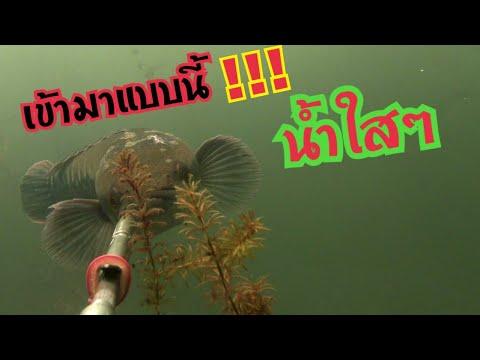 ตามหาปลาในดงสาหร่าย