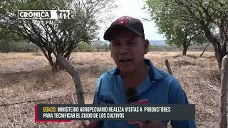 Grandes proyecciones en cosechas para productor de hortalizas en Boaco - Nicaragua