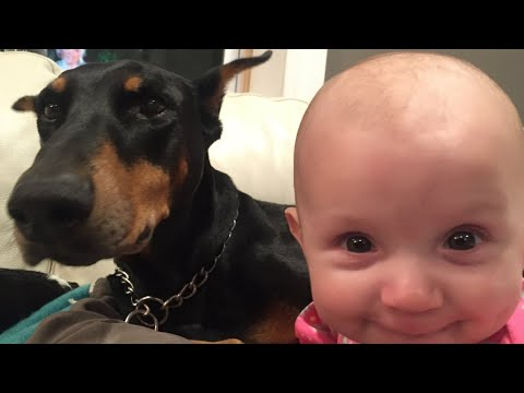 connectYoutube - Babies can't stop laughing - CAN YOU ?