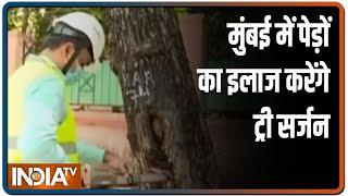 Mumbai: BMC appoints 'tree surgeon' to conduct audit of trees - INDIATV