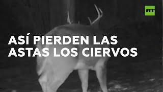 RT en Español