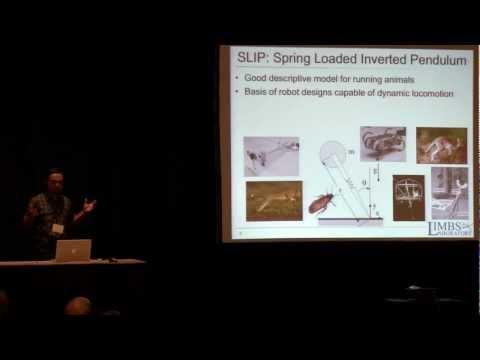 TD-SLIP: A Better Predictive Model for Human Running