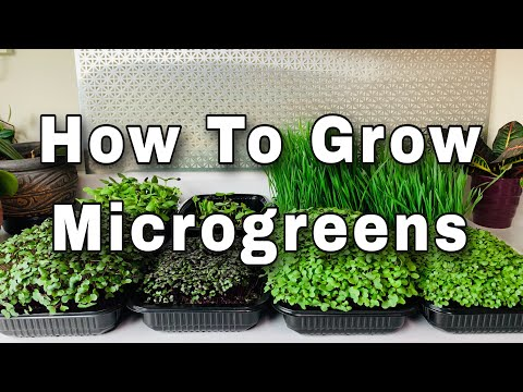 How To Grow Microgreens - Seed To Harvest (Worm Castings Experiment)
