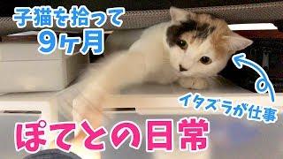 猫 9ヶ月 子猫『子猫を拾って9ヶ月・ほ?てとの日常』などなど