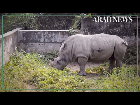 Bangladesh zoo plans to end years of loneliness for captive animals
