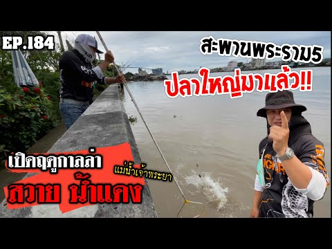 """🎣🐠-We-are-Angler-EP:184""""ฤดูกาล"""