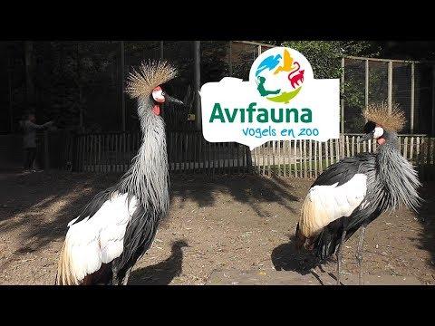 Avifauna Bird Park - Alphen aan den Rijn, Holland