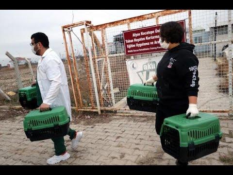 9 yaban hayvanı, Ormanya'ya teslim edildi