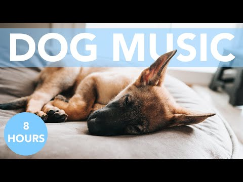 Dog Music! Relaxing Pet Acoustics to Chill Your Dogs! ASMR!