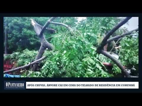 Após chuvas, árvore cai em cima do telhado de residência em Corumbá
