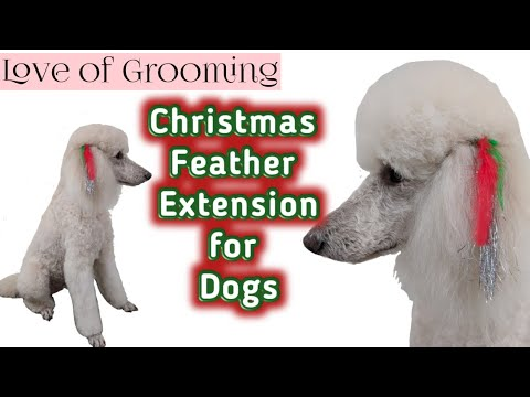 How to attach Feather Extension to Dogs Ears | Christmas Dog Feather Extension