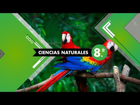 El color de las cosas # 26, 8.º Ciencias Naturales Lección Educativa