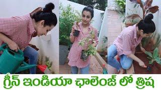 Trisha Krishnan accepted Green India Challenge | గ్రీన్ ఇండియా ఛాలెంజ్ లో త్రిష | IG Telugu - IGTELUGU