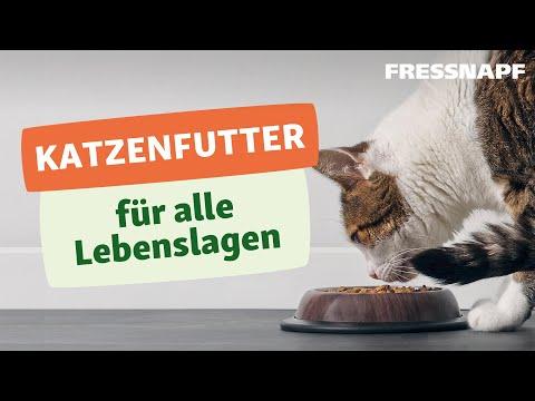 Katzenfutter für jede Lebenslage - Kitten, Adult & Senior