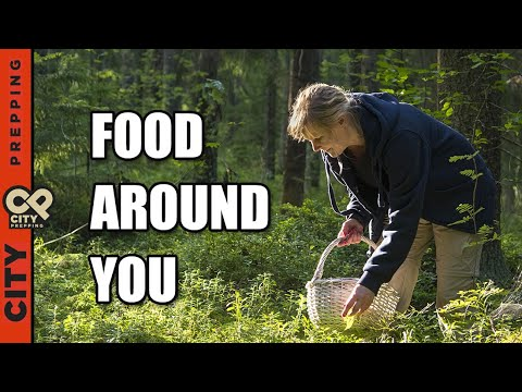 25 Plants You Can Eat In Nature (foraging for food)