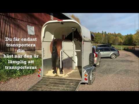 Transport av häst på väg