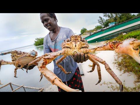 Huge Caribbean KING CRAB ? RUNDOWN!! Jamaican Seafood Tour - Jamaica! ??