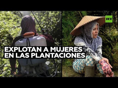 Las mujeres sufren en las plantaciones de palma en Indonesia