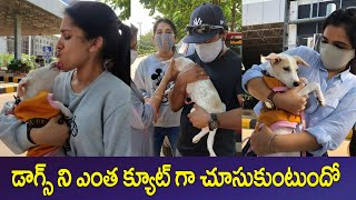 Jabardasth Anchor Rashmi Shows Her Love Towards on A Dog | IG Telugu - IGTELUGU
