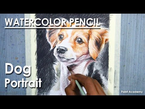 Watercolor Pencil Drawing : Dog Portrait | How to Shade