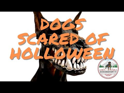 DOGS SCARED OF HOLLOWEEN COMPILATION- LIVE REACTION