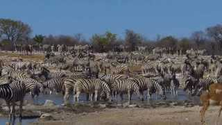 At the Kalkheuwel Waterhole in Etosha National Park, Namibia