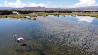 """Alexis Dessard """"el turista de la limpieza"""" seguirá en Bolivia con nuevos desafíos"""