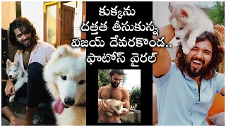 Hero Vijay Devarakonda Adopted Two Pet Dogs | Latest Tollywood News | TFPC - TFPC