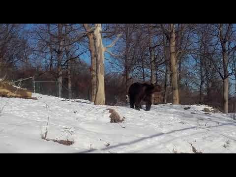 Bär Bobita erlebt seinen ersten Schnee