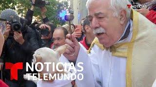 Gatos, perros, tortugas: sacerdote bendicen a animales e incluso les dejan entrar a misa   Telemundo