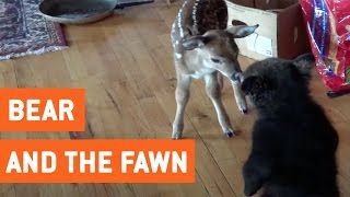 Bear Cub and Baby Deer Become Friends | For The First Time