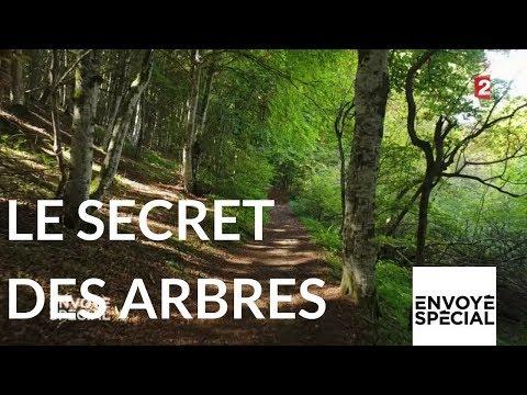 nouvel ordre mondial | Envoyé spécial. Le secret des arbres - 26 octobre 2017 (France 2)
