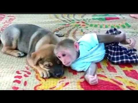 น้องลิงกับน้องหมาสุดน่ารักเป็น