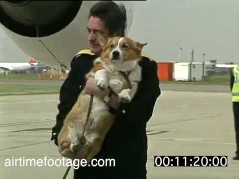 connectYoutube - Queen with corgis at Heathrow - rushes