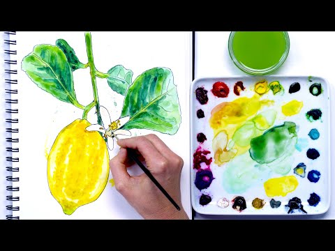 How to paint an lemon in watercolour and ink with Anna Mason