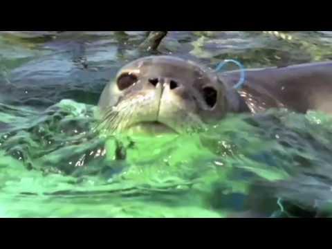 World Animal Protection Sea Change 2016