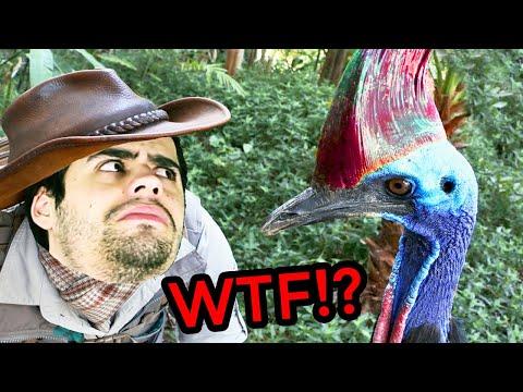 El ave más peligrosa del mundo: Un verdadero dinosaurio viviente