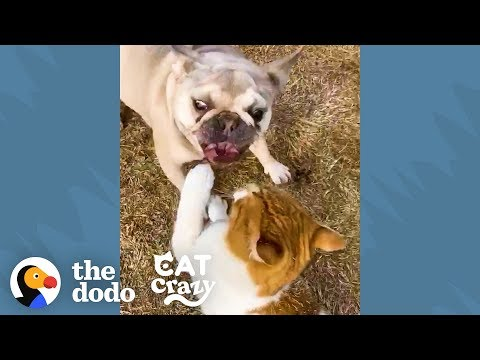 Feral Cat And Her Neighborhood Dog Are Inseparable | The Dodo Cat Crazy