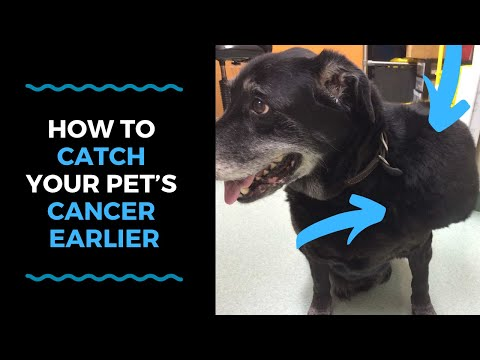 How To Catch Your Pet's Cancer Earlier VLOG 121