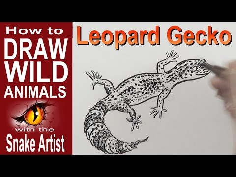 download youtube to mp3 how to draw a leopard gecko intermediate