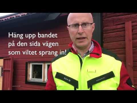 Så gör du om du råkar ut för en viltolycka - tips från viltvårdaren i Österåkers kommun